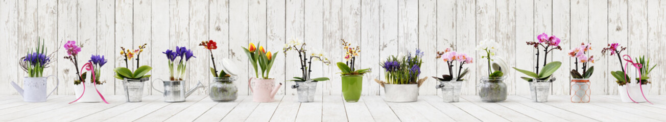 Tuinposter Orchidee flowers in pots set isolated on white wood background, web banner with copy space for florist shop concept