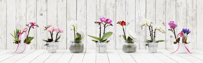 flowers in pots set isolated on white wood table background, web banner with copy space for florist shop concept