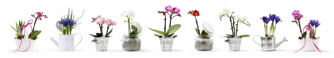 Tuinposter Orchidee flowers in pots set isolated on white background, web banner with copy space for florist shop concept