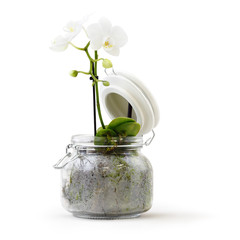 orchid flower plant in pot glass isolated on white background, florist shop or gift card present concept