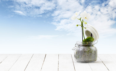 orchid flower plant in pot glass isolated on wooden white table and sky background, web banner florist shop or gift card present concept