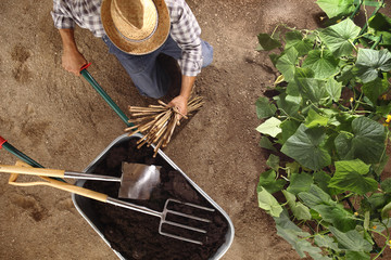 man farmer working in vegetable garden, wheelbarrow  full of fertilizer with spade and pitchfork, bamboo sticks for tie the plants, top view and copy space template