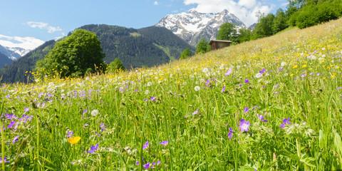 Panorama einer Bergblumenwiese im Frühling