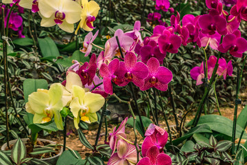 Beautiful orchids background