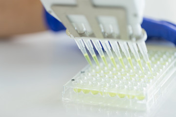 Scientist Using Multichannel pipette and multiwell eppendorf plate, Concept Science and Technology