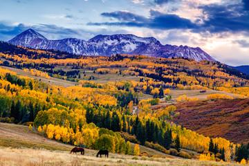 Horses grazing in Colorado in autumn