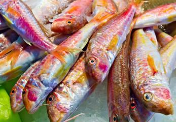 Raw fish on market Seafood