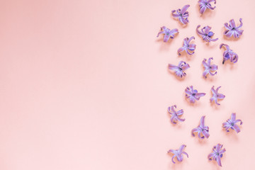 Floral beautiful pastel pink background. Purple small flowers of Hyacinth. Flat lay, top view, copy space