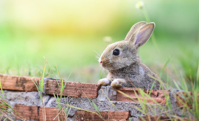 Cute rabbit sitting on brick wall and green field spring meadow / Easter bunny hunt for easter egg