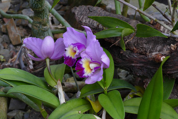 nice colorfull orchidea floret with leaf