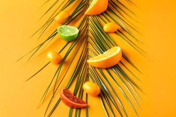 Assortment of tasty citrus fruits with tropical leaf on color background