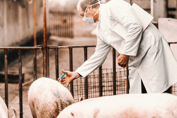 Veterinarian in white coat and mask on face holding clipboard under armpit and giving injection to pig while standing in cote.