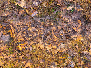 Colorful autumn fallen leaves on brown forest soil background texture