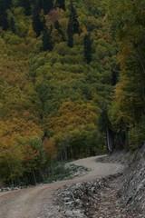 Colorful Trees in Autumn Season.savsat/artvin