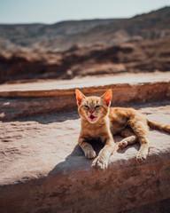 Photo d'un chat au soleil à Pétra, Jordanie