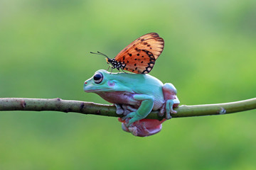 Wall Mural - Dumpy frog best friend with butterfly, butterfly landing on body dumpy frog