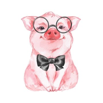 Funny pig in glasses. Isolated on white. Cute watercolor illustration