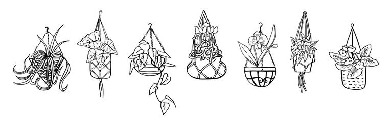 Houseplants in hanging flowerpots. Vector hand drawn outline black and white sketch illustration