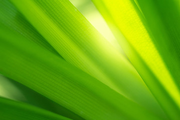 Green nature background. Closeup green leaf for natural and freshness wallpaper concept Wall mural