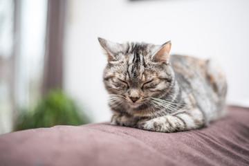 Katze ist müde bei der Fellpflege