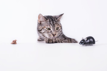 Katze mit Maus ist neugierig
