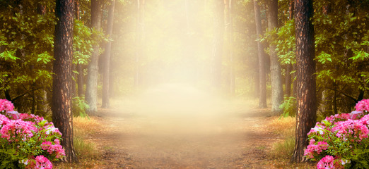 Wall Mural - Fantasy summer panoramic photo background with pine tree forest and mysterious foggy trail