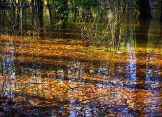 A close-up of a translucent shallow creek full of Autumn leaves and tree shadow lines reflecting in the water.