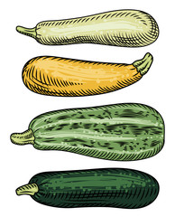 Set of four zucchini of different varieties and colors  on a white background. Detailed drawing by hand.