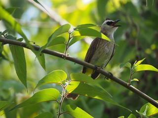 Beautiful bird. Close up on bird