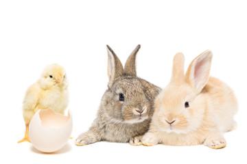 rabbit chicken egg white background