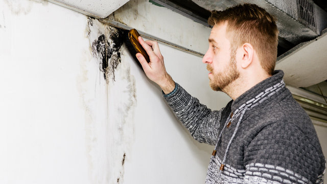 Bearded man removes black mold on the wall after leakage