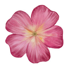 Watercolor flower isolated on white background.