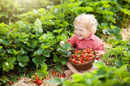 Kids pick strawberry on berry field in summer