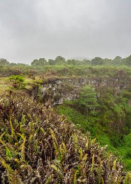 Los Gemelos Volcano, Santa Cruz or Indefatigable Island, Galapagos, Ecuador