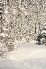 Winter scenery with trees and snow