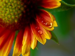 orange and yellow flower in close-up photography