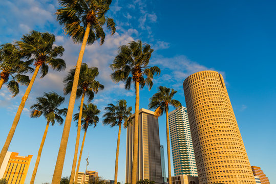 Palm trees and skyscrapers in downtown Tampa at sunset