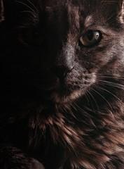 selective focus photo of black cat