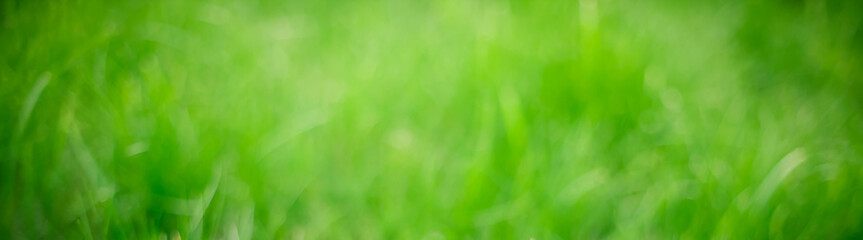 Panoramic Blurred Green Nature Summer Spring Background