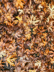 dried leaves top-view photography
