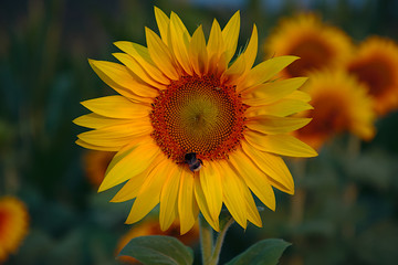 selected focus photography of yellow sunflower