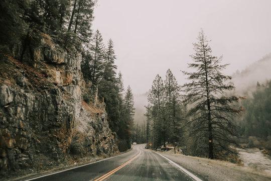 empty winding road near pine trees under foggy