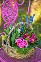 Colorful spring flowers in a basket on a pink garden chair
