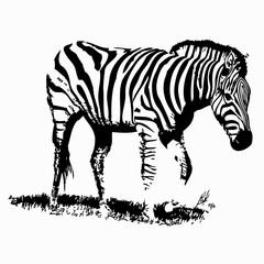 Zebra silhouette vector illustration