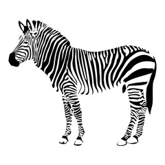 Zebra silhouette vector illustration