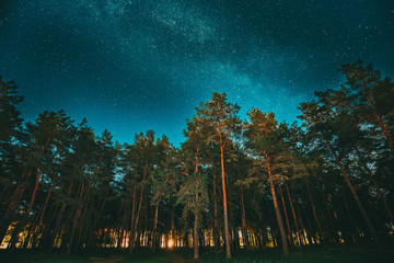 Green Trees Woods In Park Under Night Starry Sky With Milky Way Galaxy. Night Landscape With Natural Real Glowing Stars Over Forest Or Park At Summer Season. View From Eastern Europe At Spring Season
