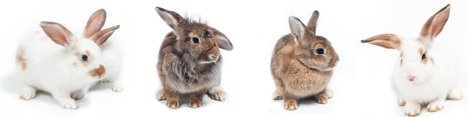Group of white and brown rabbits sitting on white background.  Easter festival symbol. Fototapete