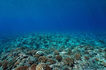 Underwater seascape coral reef seabed, natural scene, Pacific ocean, French Polynesia
