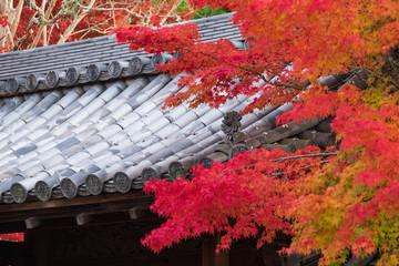 南禅寺 日本瓦 紅葉 秋 京都 和風イメージ