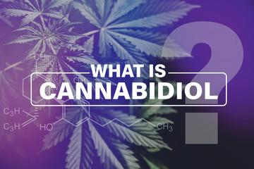 Cannabidiol CBD formula, marijuana vegetation plants, marijuana leaves, Growing cannabis indica, background green , cultivation cannabis, hemp CBD, on black background light leaks color tones top view